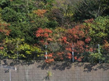 鎌倉紅葉0.JPG