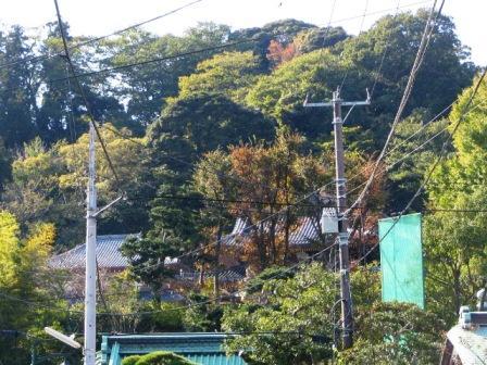 鎌倉紅葉1.JPG