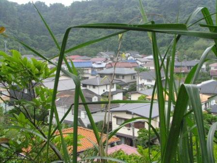 鎌倉湖6.JPG